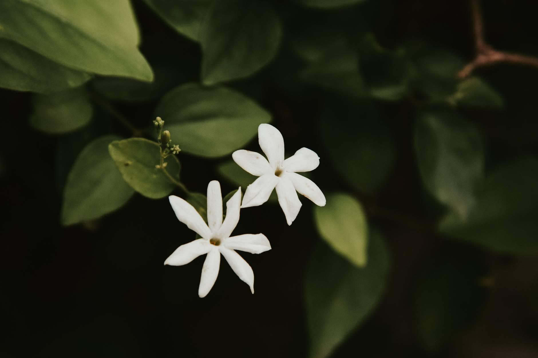 summer garden leaf blur